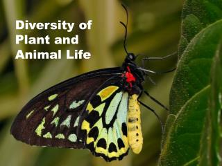 Diversity of Plant and Animal Life