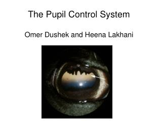 The Pupil Control System Omer Dushek and Heena Lakhani