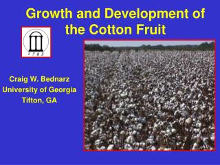 Growth and Development of the Cotton Fruit