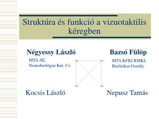 Strukt�ra  � s funkci� a vizuotaktilis k�regben