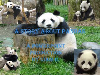 A Story About Pandas