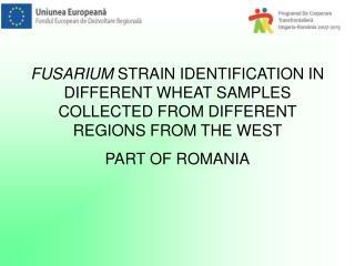 Fusarium graminearum, Fusarium culmorum