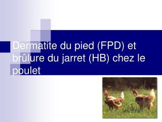 Dermatite du pied FPD et br lure du jarret HB chez le poulet