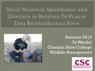 Small Mammal  Abundance  and Diversity in Relation To Prairie Dog Reintroduction Sites