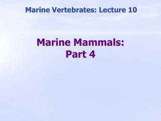 Marine Mammals: Part 4