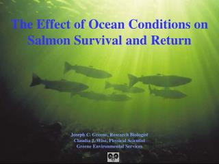 The Effect of Ocean Conditions on Salmon Survival and Return