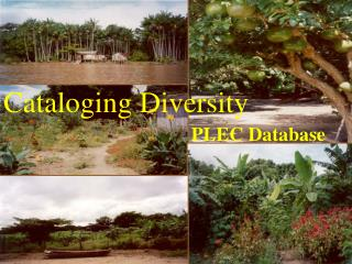 Cataloging Diversity