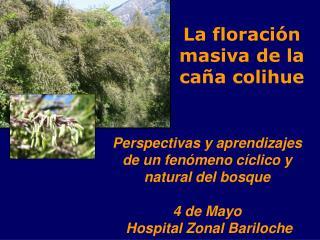 La floración masiva de la caña colihue