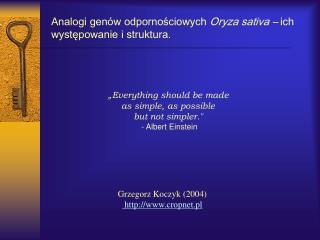 Analogi genów odpornościowych  Oryza sativa –  ich występowanie i struktura.