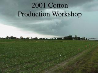 2001 Cotton       Production Workshop