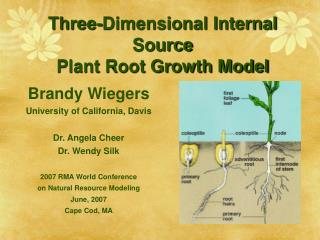Three-Dimensional Internal Source Plant Root Growth Model
