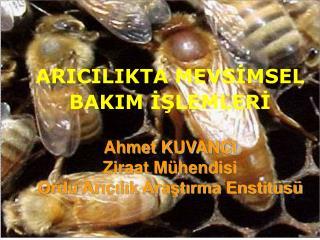 TEKNİK ARICILIK İÇİN; Doğal koşullar ve arılık yeri Yüksek verimli arı ırkları