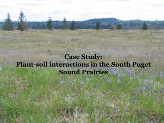 Case Study:   Plant-soil interactions in the South Puget Sound Prairies