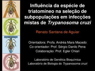 Renato Santana de Aguiar Orientadora: Profa. Andréa Mara Macedo
