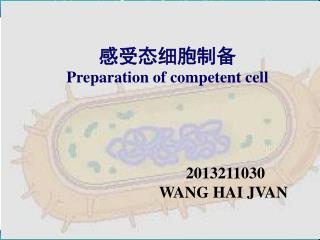 感受态细胞 (Competent cells)