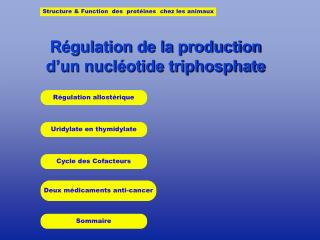 Régulation de la production   d'un nucléotide triphosphate