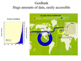 GenBank  Huge amounts of data, easily accessible