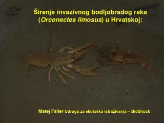 Širenje invazivnog bodljobradog raka  ( Orconectes limosus )  u Hrvatskoj :
