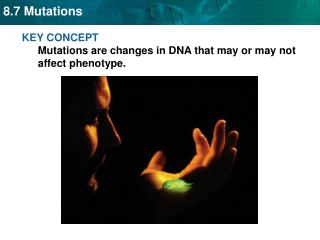 KEY  CONCEPT  Mutations are changes in  DNA  that may or may not affect phenotype.