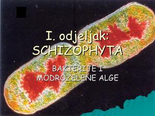 I. odjeljak: SCHIZOPHYTA