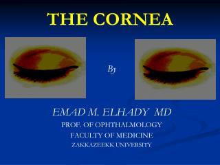 THE CORNEA