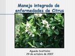 Manejo integrado de  enfermedades de Citrus