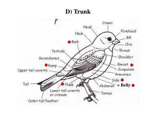 D) Trunk