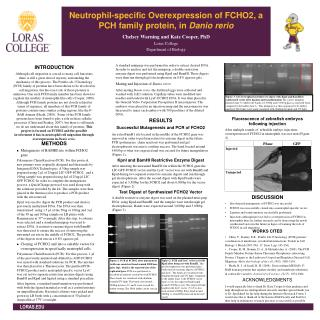 Neutrophil-specific Overexpression of FCHO2, a PCH family protein, in  Danio rerio