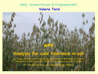 WP9 Analysis for cold tolerance in oat