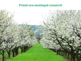Primăvara-anotimpul renaşterii