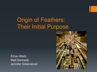 Origin of Feathers: Their Initial Purpose