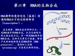第六章   RNA 的生物合成