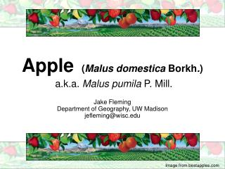 Apple ( Malus domestica  Borkh . ) a.k.a.  Malus pumila  P. Mill.