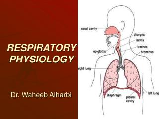 RESPIRATORY              PHYSIOLOGY Dr. Waheeb Alharbi
