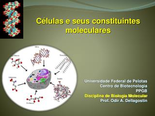 Universidade Federal de Pelotas Centro de Biotecnologia PPGB Disciplina de Biologia Molecular