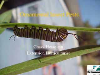 Ornamental Insect Pests