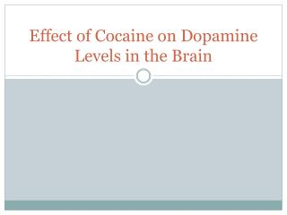 Effect of Cocaine on Dopamine Levels in the Brain