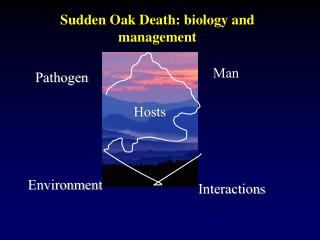 Sudden Oak Death: biology and management