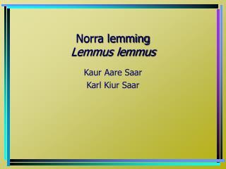 Norra lemming Lemmus lemmus