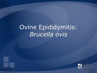 Ovine Epididymitis: Brucella ovis