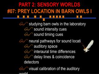studying barn owls in the laboratory  sound intensity cues  sound timing cues