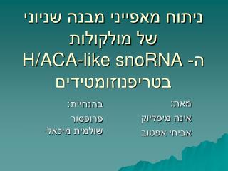 ניתוח מאפייני מבנה שניוני של מולקולות  ה-  H/ACA-like snoRNA בטריפנוזומטידים