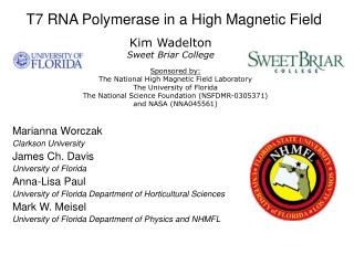 T7 RNA Polymerase in a High Magnetic Field