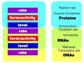 RNA level/ Transcription rate