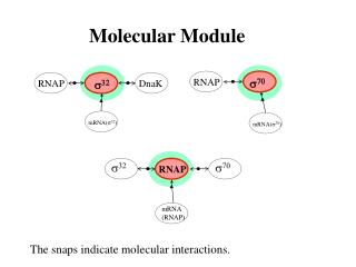 Molecular Module