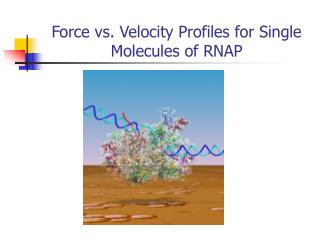 Force vs. Velocity Profiles for Single Molecules of RNAP