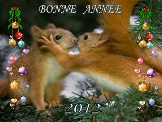 BONNE   ANN E