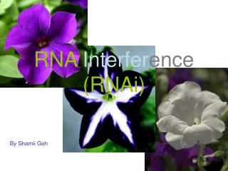 RNA Interfer ence (RNAi)