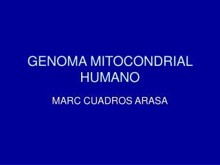 GENOMA MITOCONDRIAL HUMANO
