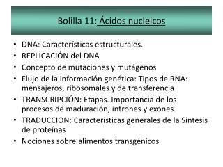 Bolilla 11:  Ácidos nucleicos